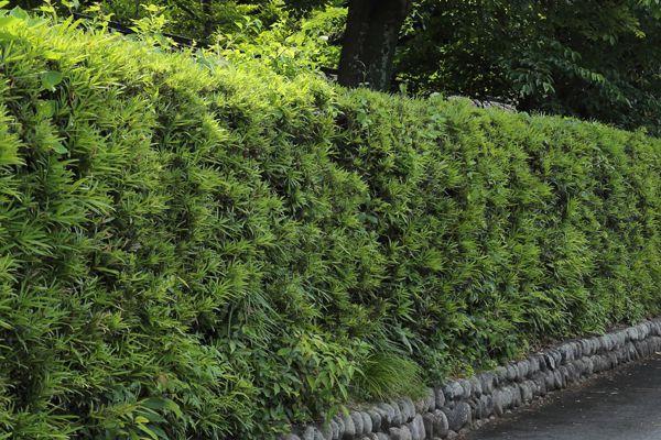 千葉県の木 マキ